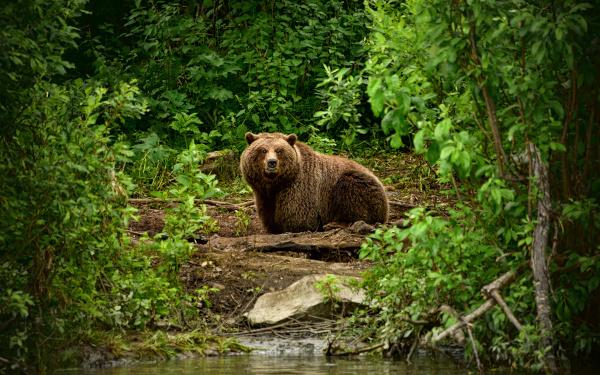 Во всем мире медведи стали чаще нападать на людей