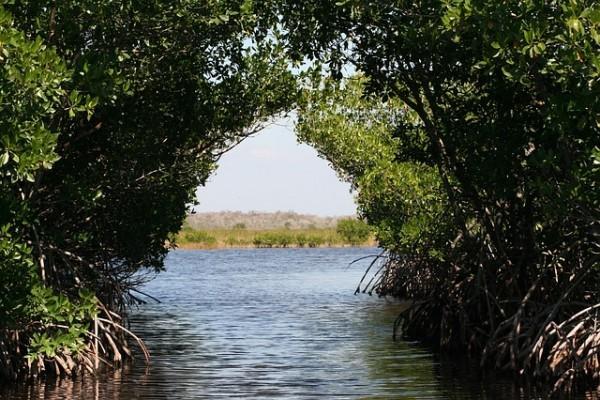 Мангровые леса могут помочь странам снизить выбросы углерода