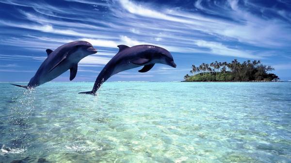 Биологи обнаружили у дельфинов Ла-Манша химикаты и ртуть