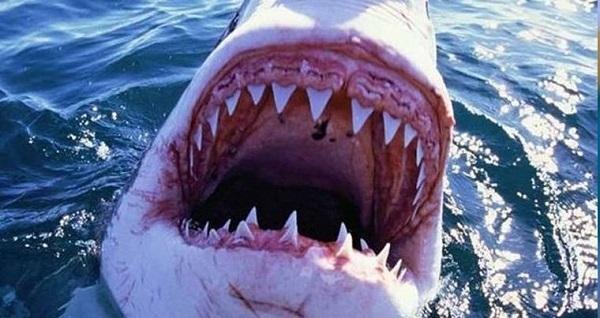 На Багамах акула укусила рыбака за голову