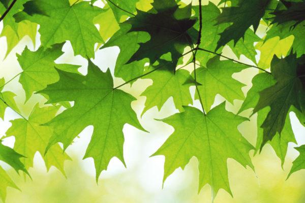 Глобальное потепление делает листья тропических лесов менее питательными