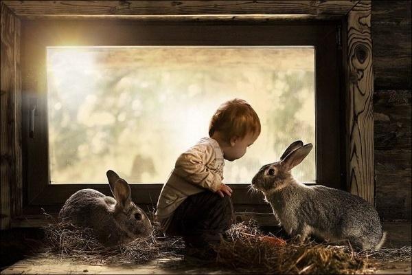 Городские кролики, как и люди, живут в небольших домах