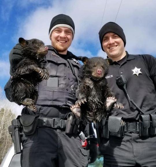 Полицейские-герои спасают двух плачущих медведей из затопленной берлоги