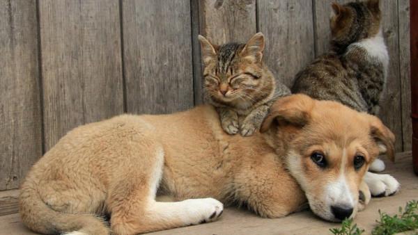 В России утвердили новые правила отлова бездомных животных