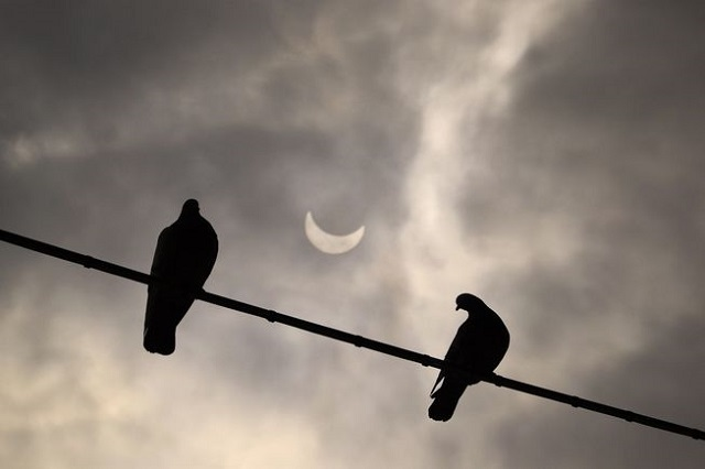 Как ведут себя птицы во время солнечного затмения