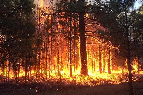 В Курске за сутки случилось 15 пожаров