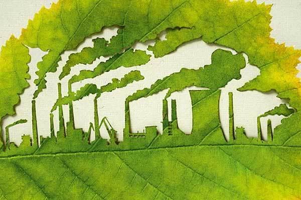 Листья березы лучше всего поглощают загрязняющие вещества