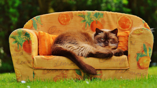 Открытие: кошки общаются между собой при помощи бактерий