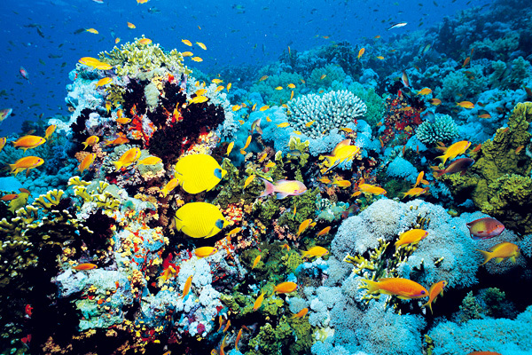 Морские экосистемы вступили в антропоцен