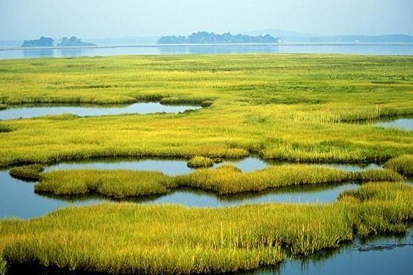 Арктические водно-болотные угодья тоже подвержены изменению климата