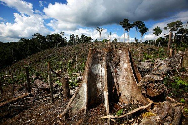 Нестабильность лесов Амазонки возрастает