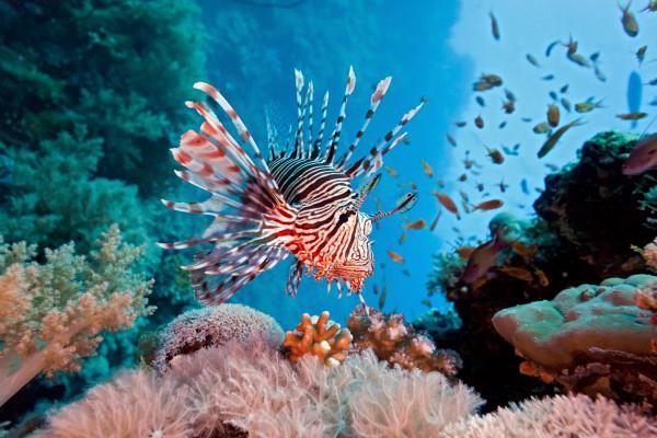 Экологические факторы влияют на распространение крылаток на глубоких рифах