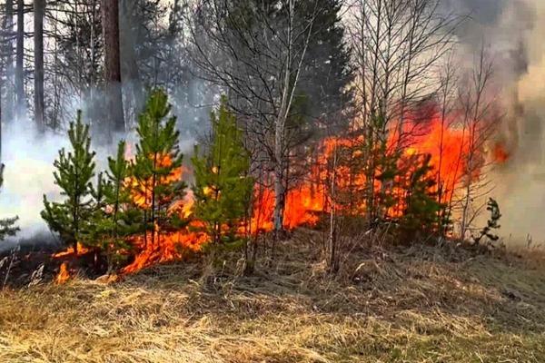 Фундаментальные проблемы устойчивости к лесным пожарам