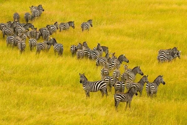 Размер ареала влияет на устойчивость популяции животных