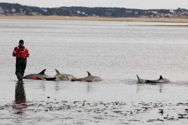 Разливы нефти отравляют и убивают дельфинов