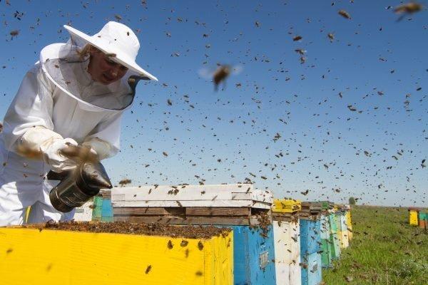 Эксперимент на ульях подтвердил опасения ученых: пчелы при потеплении климата погибнут