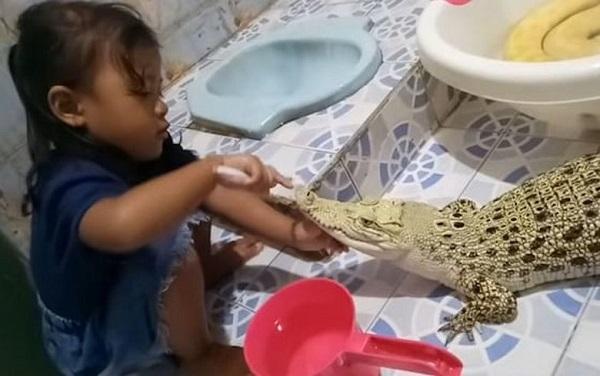 3-летняя девочка играет с крокодилом как с куклой