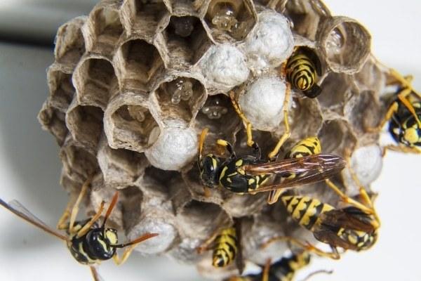 Причины вымирания пчел