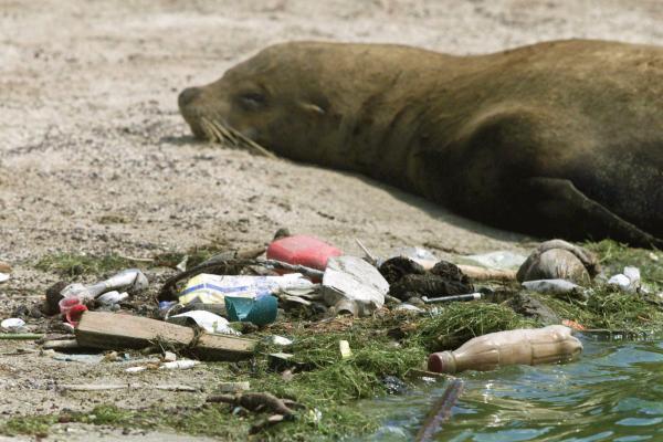 Четверть позвоночных животных умирает из-за людей