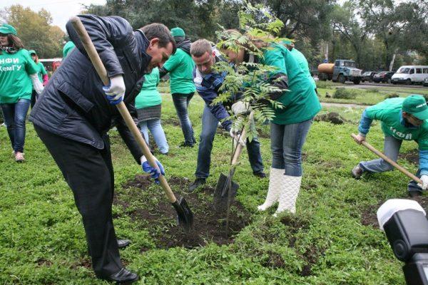 В Нижегородской области высадят около 200 деревьев осенью