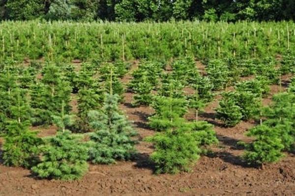 В Свердловской области посадят 55 га леса в рамках специальной акции