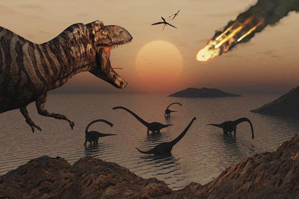 Какие птицы пережили динозавров