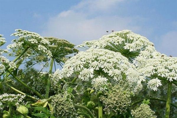 Природные вредители: виды, захватывающие экосистемы