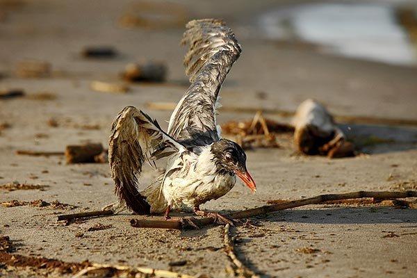 Птицы против пластика - глобальная экологическая катастрофа