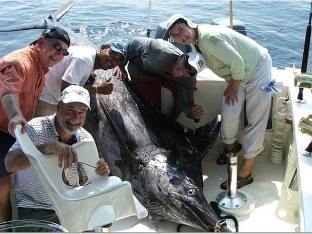 В Австралии поймали гигантского марлина