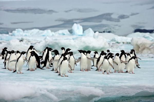 Антарктида вновь испугала ученых