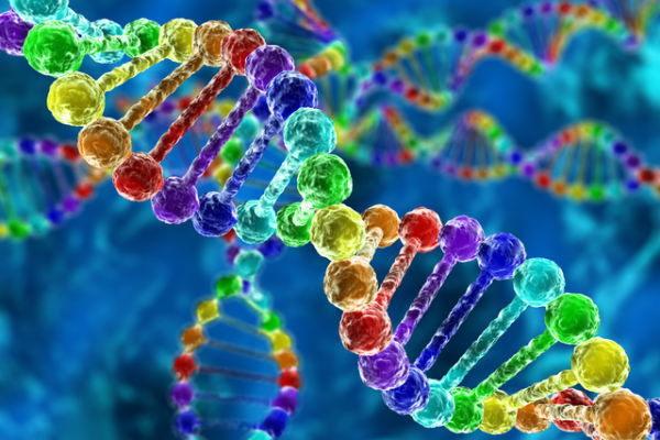 Древняя ДНК - мощный инструмент для изучения прошлого