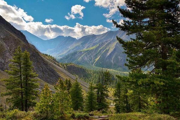 Хакасию посетит независимый лесопатолог