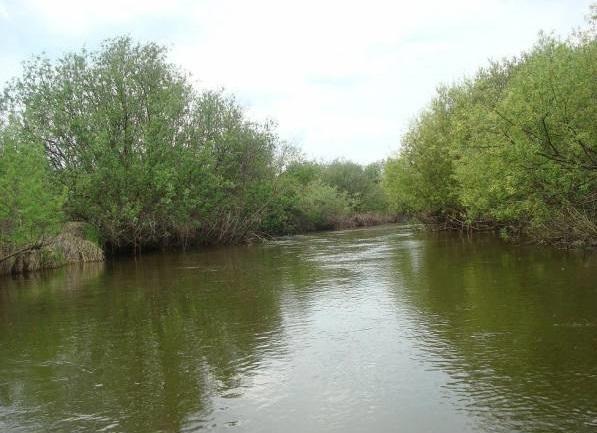 В реке Сереж массово гибнет рыба