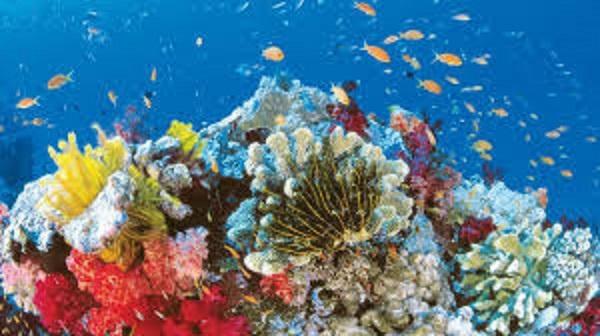 ОАЭ создадут крупнейший в мире искусственный коралловый риф
