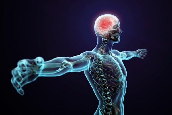Интересные факты о нервной системе: шесть ее особенностей
