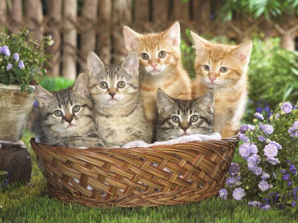 Стало известно, насколько прочно могут привязываться к хозяевам котята