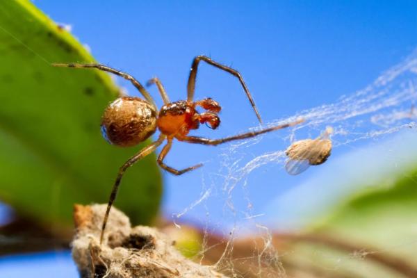 Биологи выяснили, почему пауки становятся агрессивнее