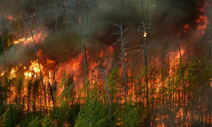 Уроки лесных пожаров в уходящем году