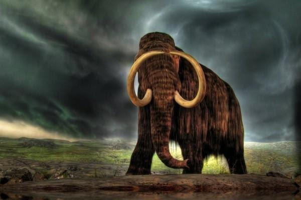 Ученые оценили влияние человека на вымирание крупных животных