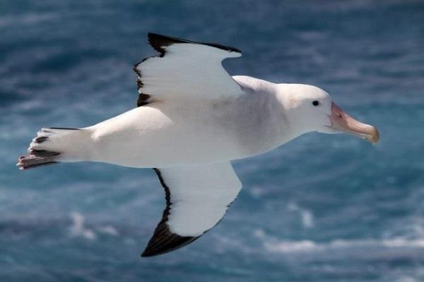 Альбатросы и беспилотники: человеку есть что позаимствовать у природы