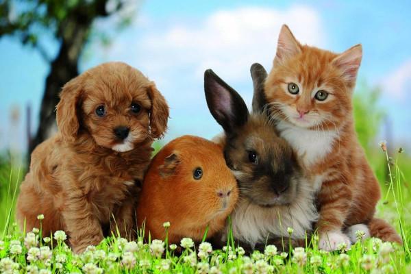 В России разработали новые правила учета домашних животных