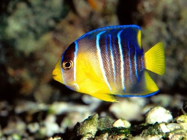 Ученые узнали способ плавания рыб