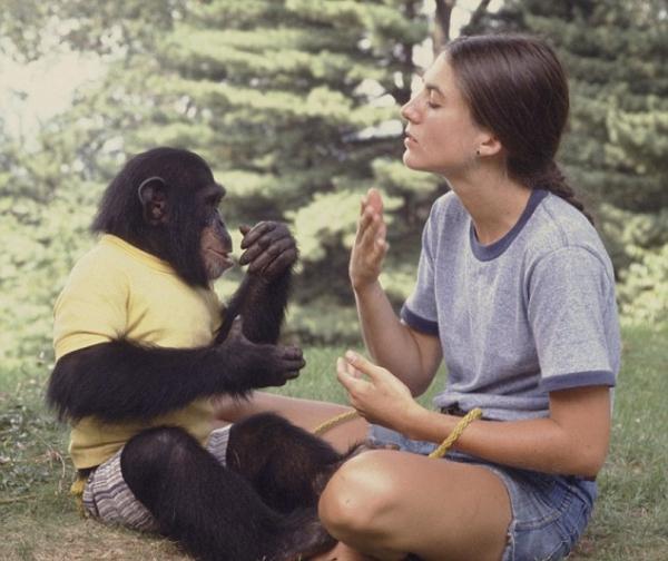 Специалисты выяснили, что обезьяны могут связать два слова