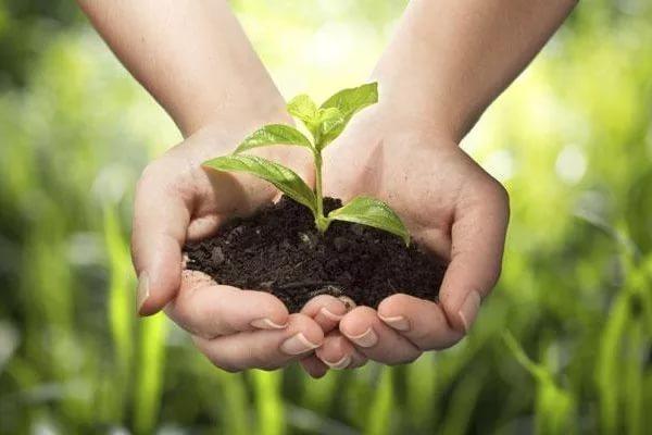 В Роспотребнадзоре дали комментарий по поводу оценки безопасности почв