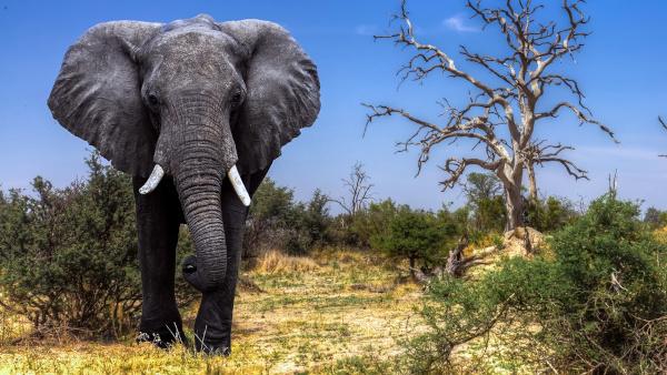 В США зоозащитники потребовали освободить слониху после 40 лет жизни в зоопарке