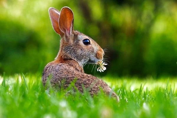 Интересное про зайцев