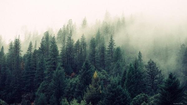 Полидоминантные леса легче переносят засуху