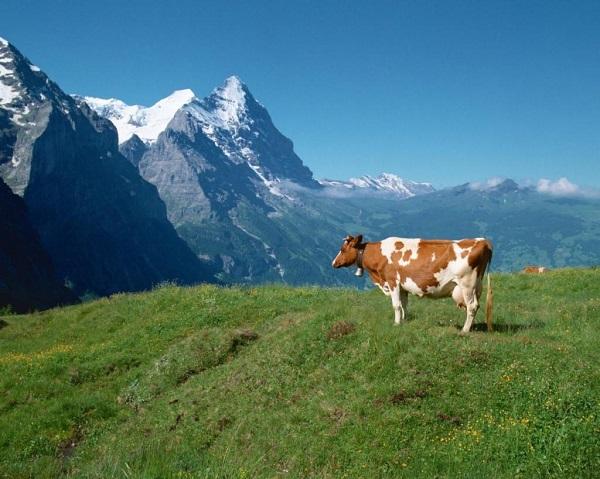 Альпийские экосистемы борются за восстановление