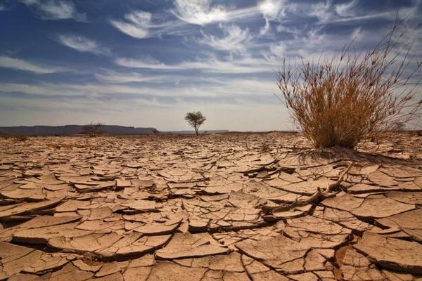 Потепление воды и недостаток кислорода вызвали массовое вымирание