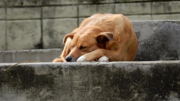 Жители Тосно обнаружили собаку, которую хозяева морили голодом